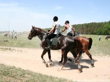 Популярность конного спорта